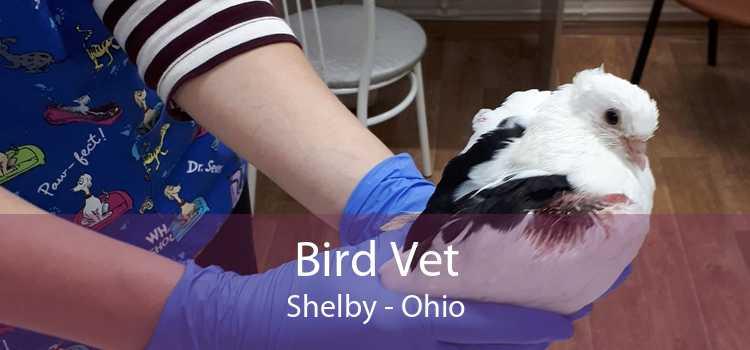 Bird Vet Shelby - Ohio