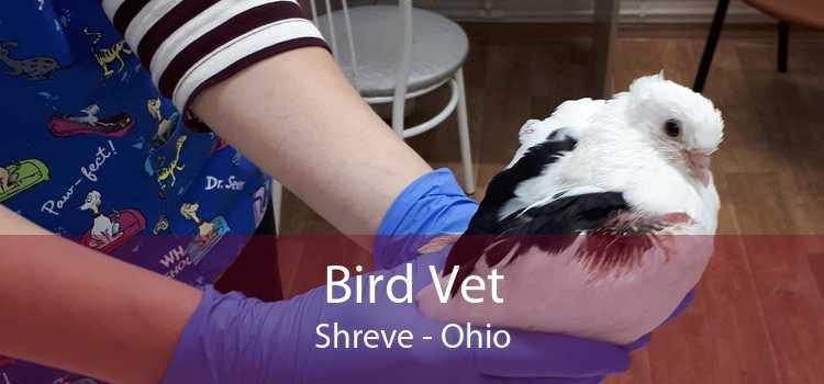 Bird Vet Shreve - Ohio