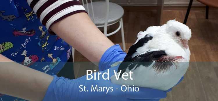 Bird Vet St. Marys - Ohio