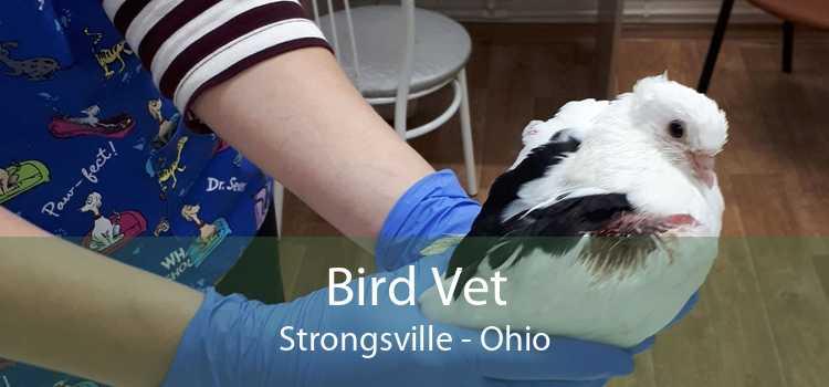 Bird Vet Strongsville - Ohio