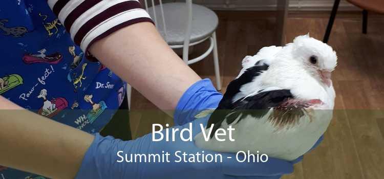 Bird Vet Summit Station - Ohio