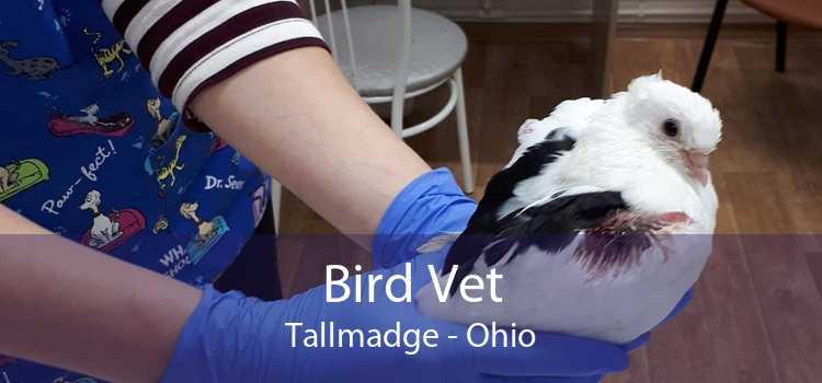 Bird Vet Tallmadge - Ohio