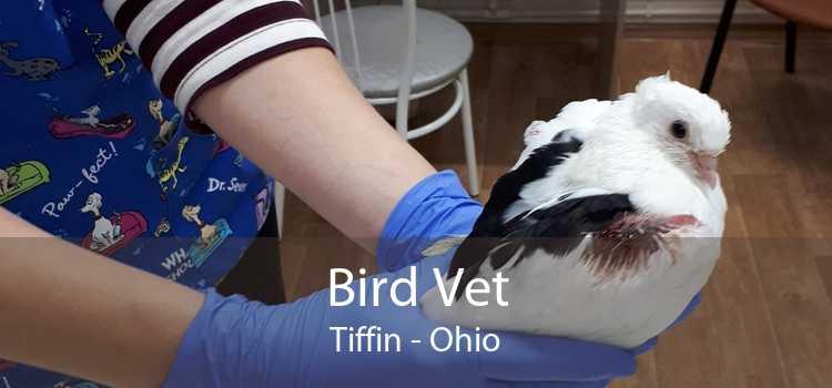 Bird Vet Tiffin - Ohio