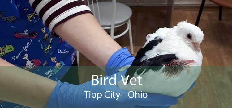 Bird Vet Tipp City - Ohio