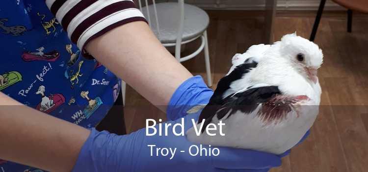 Bird Vet Troy - Ohio