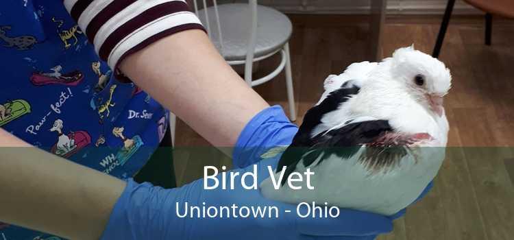 Bird Vet Uniontown - Ohio