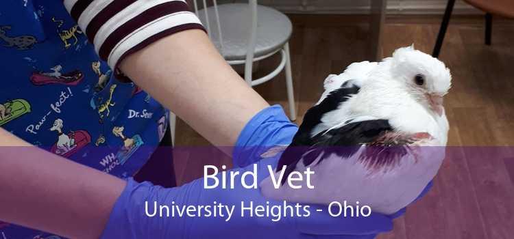 Bird Vet University Heights - Ohio