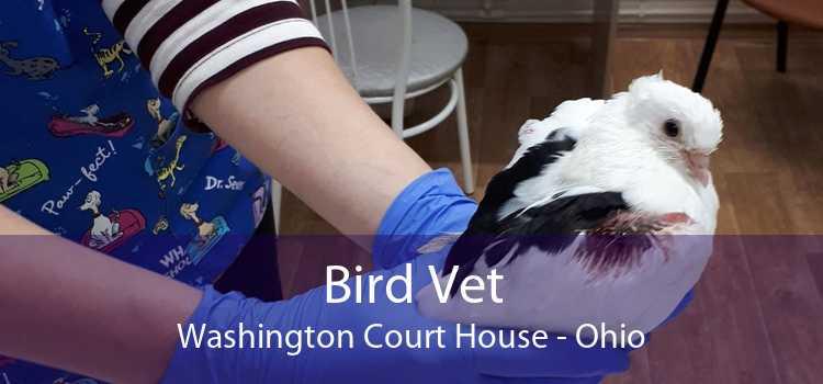 Bird Vet Washington Court House - Ohio