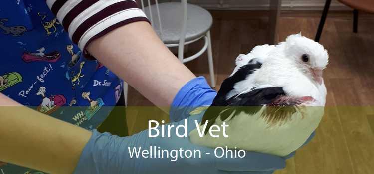Bird Vet Wellington - Ohio