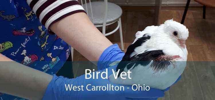 Bird Vet West Carrollton - Ohio