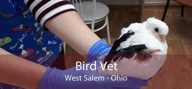 Bird Vet West Salem - Ohio