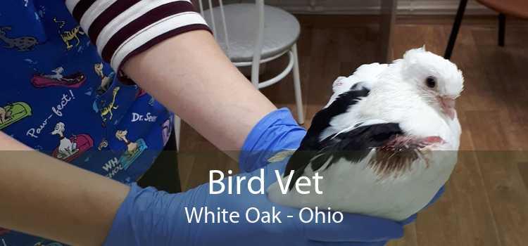 Bird Vet White Oak - Ohio