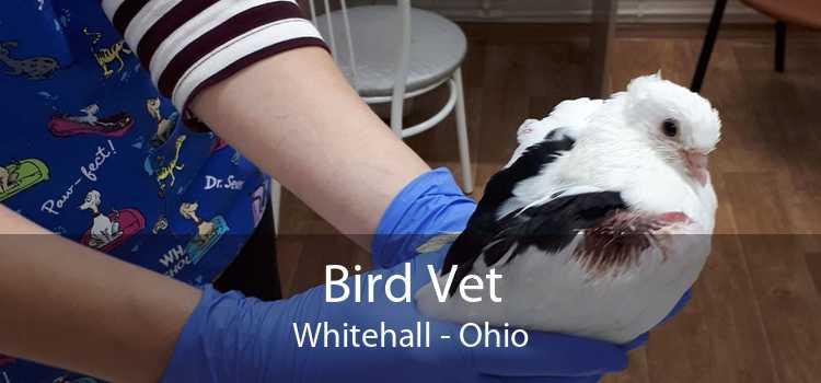 Bird Vet Whitehall - Ohio