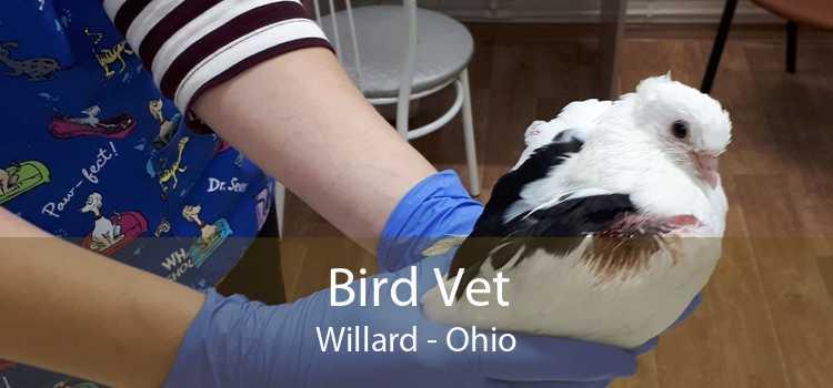 Bird Vet Willard - Ohio
