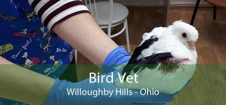 Bird Vet Willoughby Hills - Ohio
