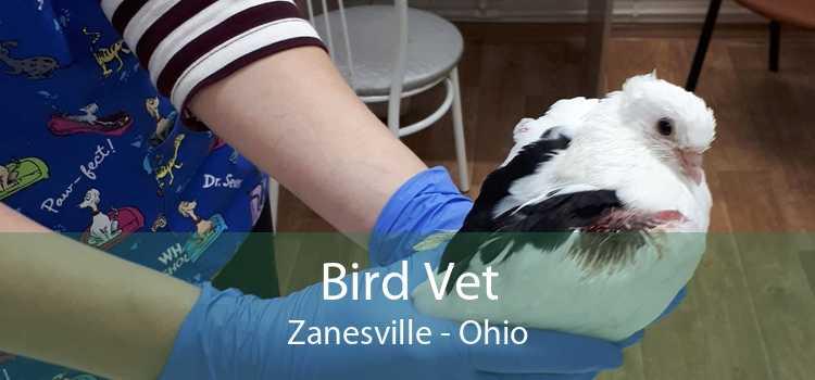 Bird Vet Zanesville - Ohio