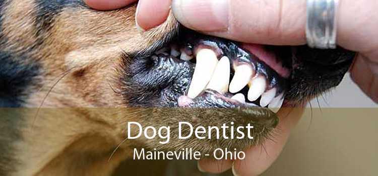 Dog Dentist Maineville - Ohio