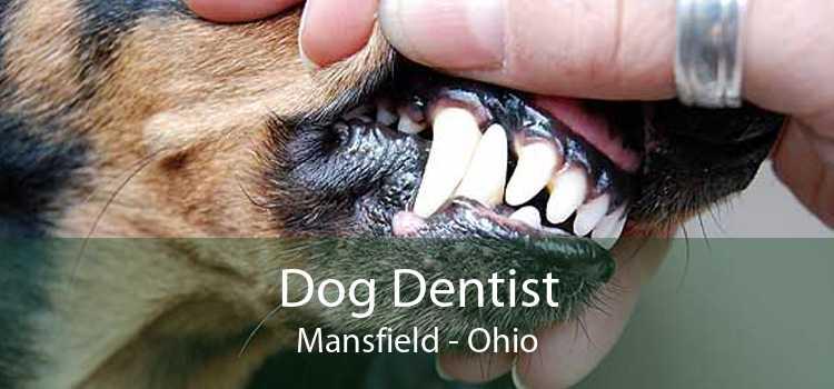 Dog Dentist Mansfield - Ohio