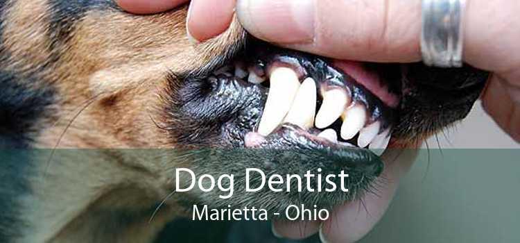 Dog Dentist Marietta - Ohio