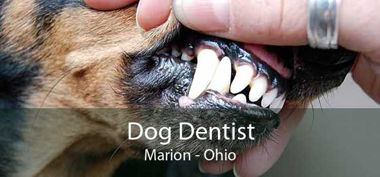 Dog Dentist Marion - Ohio
