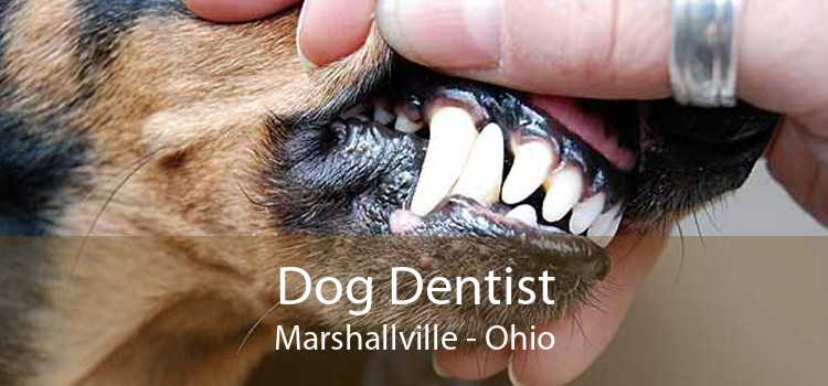 Dog Dentist Marshallville - Ohio