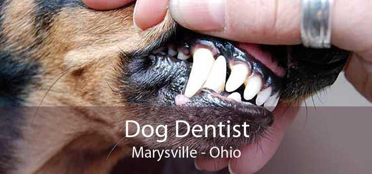 Dog Dentist Marysville - Ohio