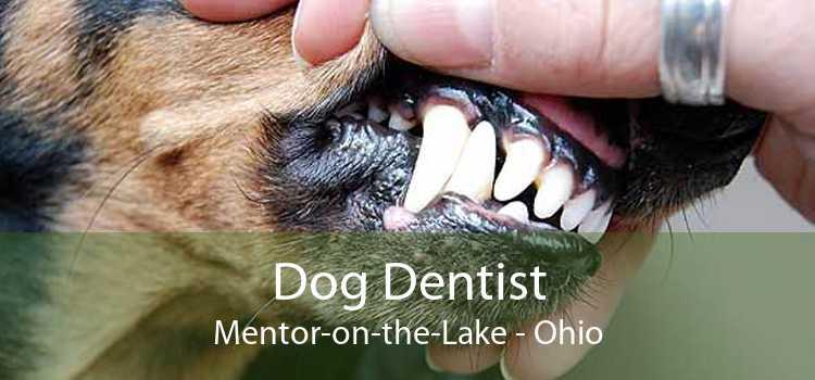 Dog Dentist Mentor-on-the-Lake - Ohio