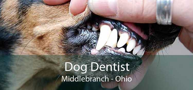 Dog Dentist Middlebranch - Ohio