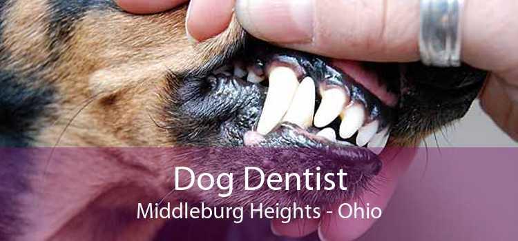 Dog Dentist Middleburg Heights - Ohio