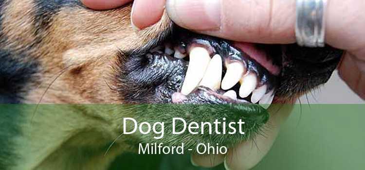 Dog Dentist Milford - Ohio