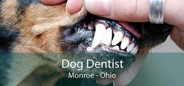 Dog Dentist Monroe - Ohio