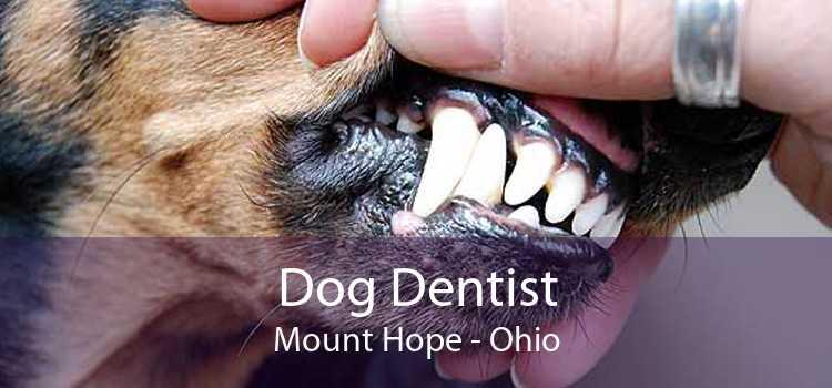 Dog Dentist Mount Hope - Ohio