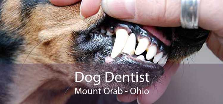 Dog Dentist Mount Orab - Ohio
