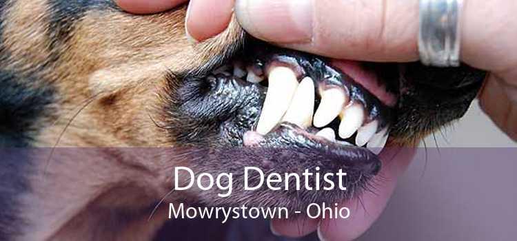 Dog Dentist Mowrystown - Ohio