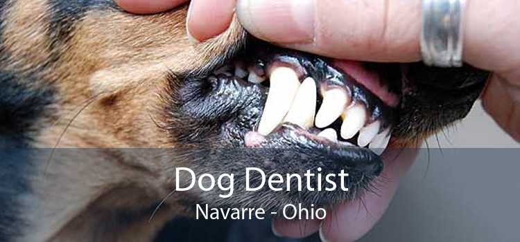 Dog Dentist Navarre - Ohio