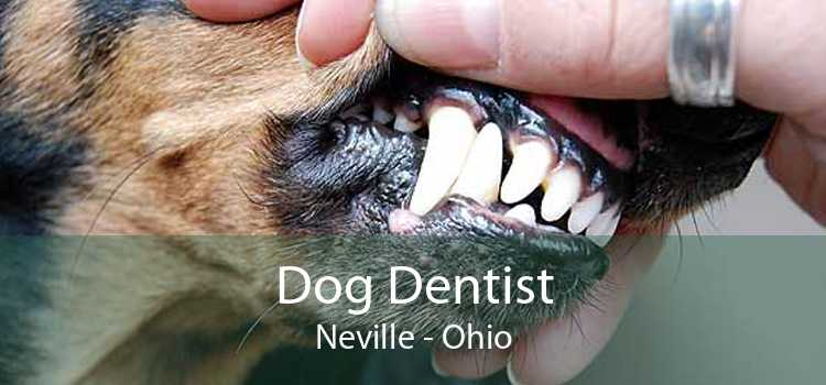 Dog Dentist Neville - Ohio