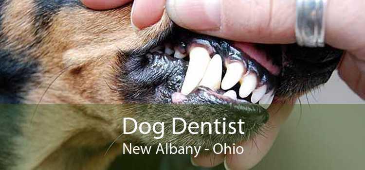 Dog Dentist New Albany - Ohio