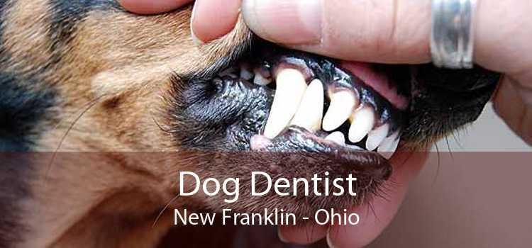 Dog Dentist New Franklin - Ohio