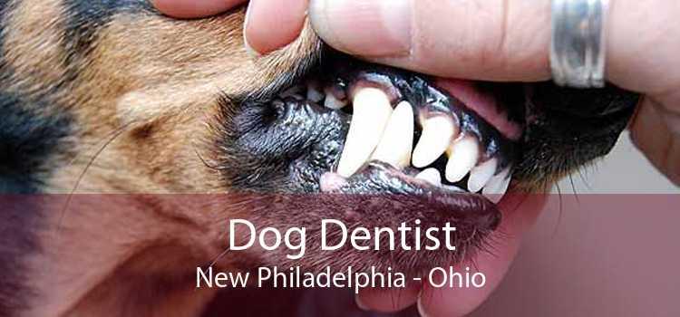 Dog Dentist New Philadelphia - Ohio