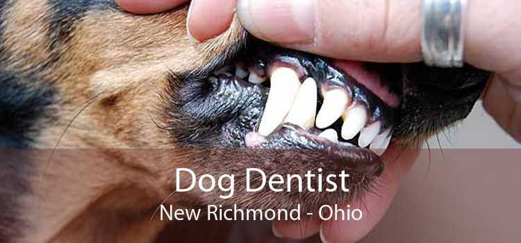 Dog Dentist New Richmond - Ohio