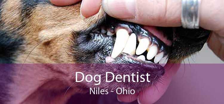 Dog Dentist Niles - Ohio