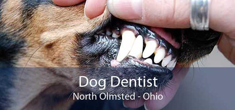 Dog Dentist North Olmsted - Ohio