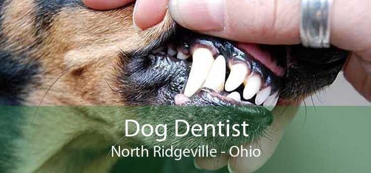 Dog Dentist North Ridgeville - Ohio