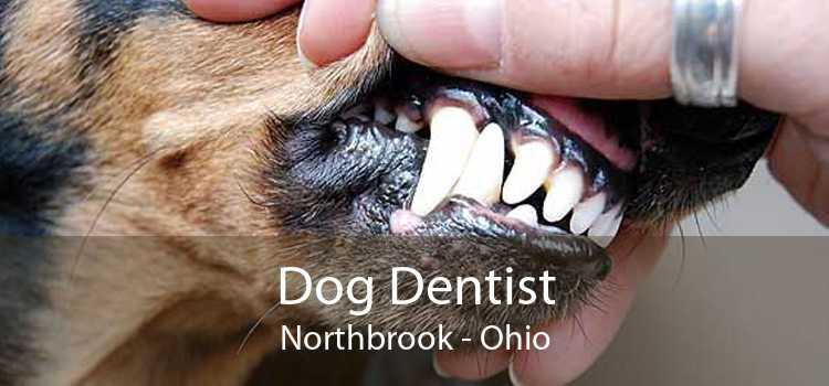 Dog Dentist Northbrook - Ohio
