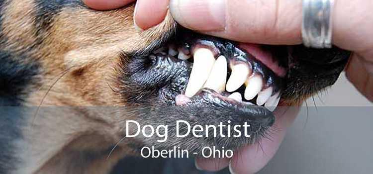 Dog Dentist Oberlin - Ohio