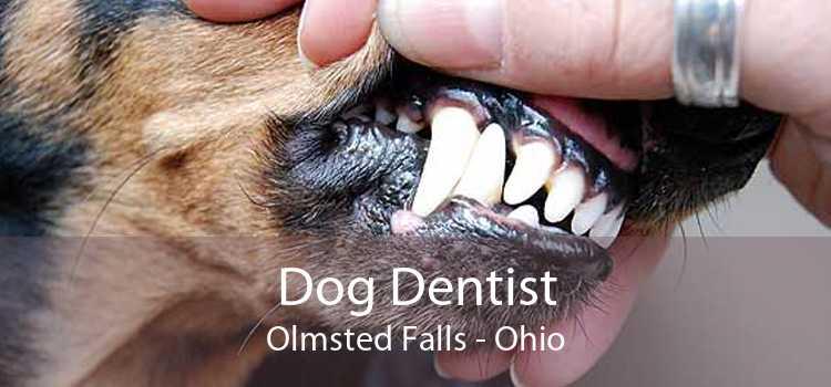 Dog Dentist Olmsted Falls - Ohio