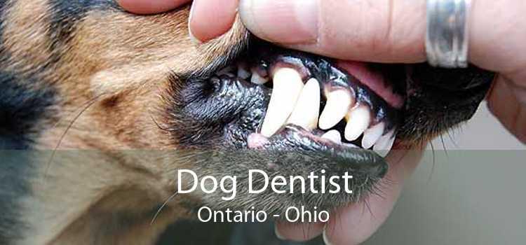 Dog Dentist Ontario - Ohio