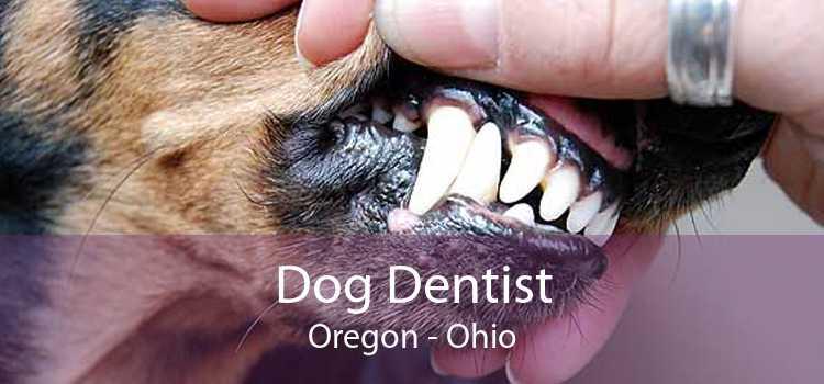 Dog Dentist Oregon - Ohio