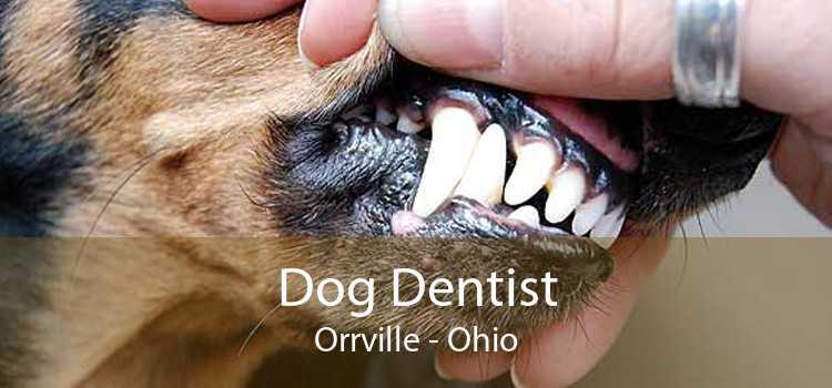 Dog Dentist Orrville - Ohio