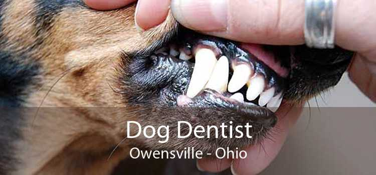 Dog Dentist Owensville - Ohio